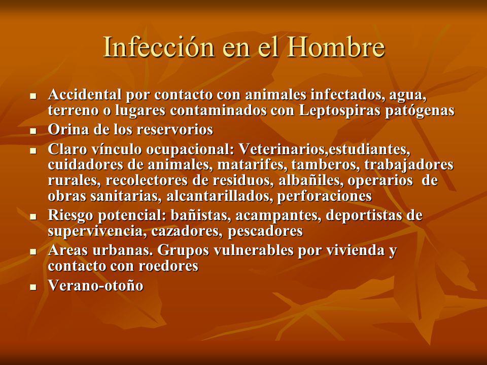 Infección en el Hombre Accidental por contacto con animales infectados, agua, terreno o lugares contaminados con Leptospiras patógenas.