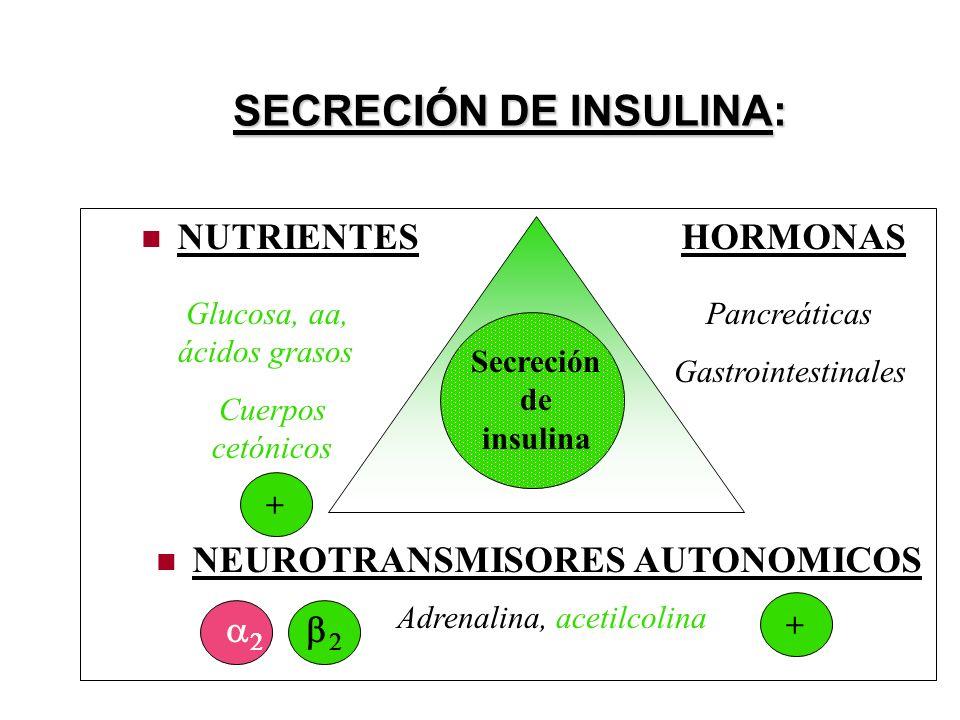 SECRECIÓN DE INSULINA: