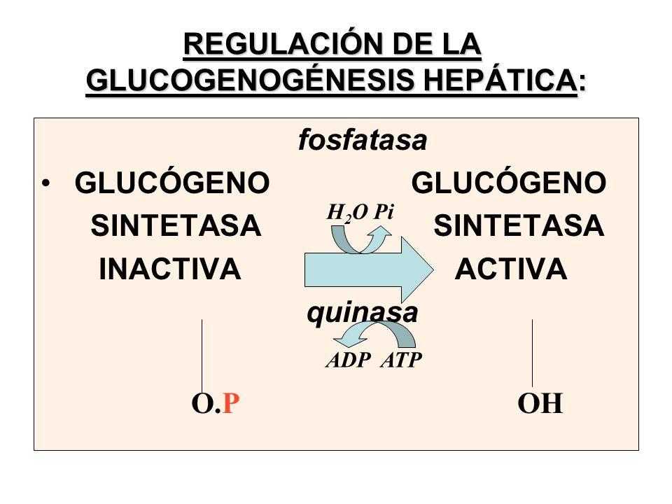 REGULACIÓN DE LA GLUCOGENOGÉNESIS HEPÁTICA: