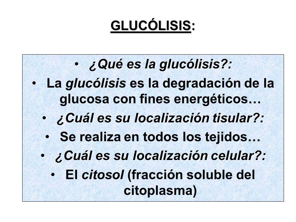 La glucólisis es la degradación de la glucosa con fines energéticos…
