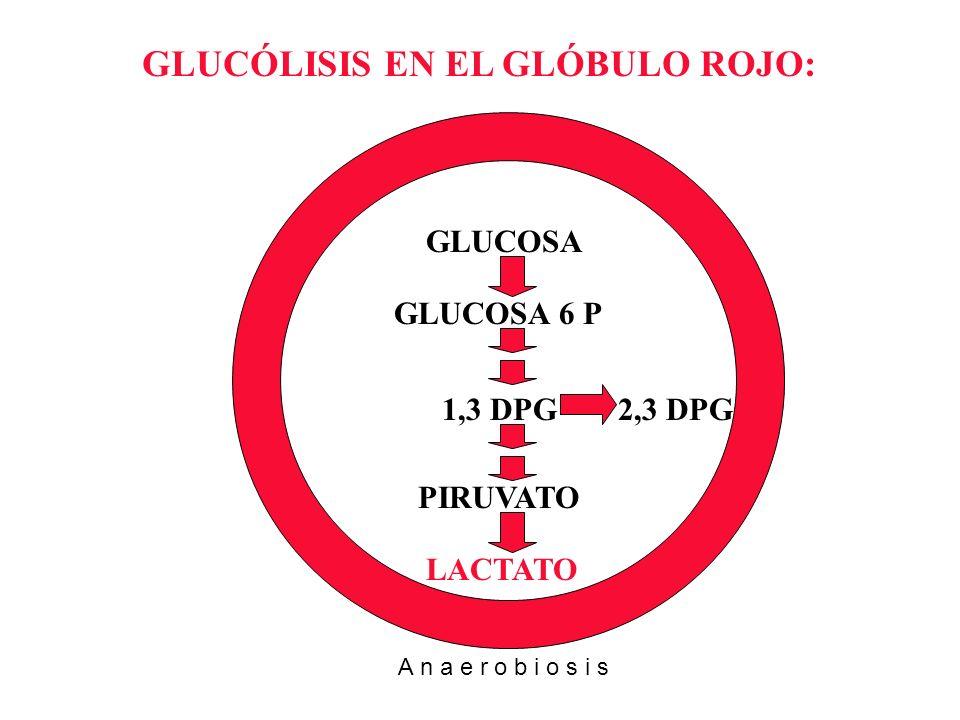 GLUCÓLISIS EN EL GLÓBULO ROJO: