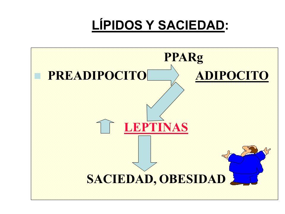 LÍPIDOS Y SACIEDAD: PPARg. PREADIPOCITO ADIPOCITO.