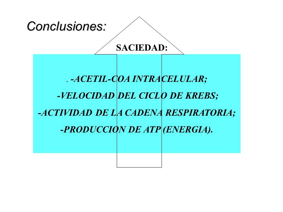 Conclusiones: SACIEDAD: . -ACETIL-COA INTRACELULAR;