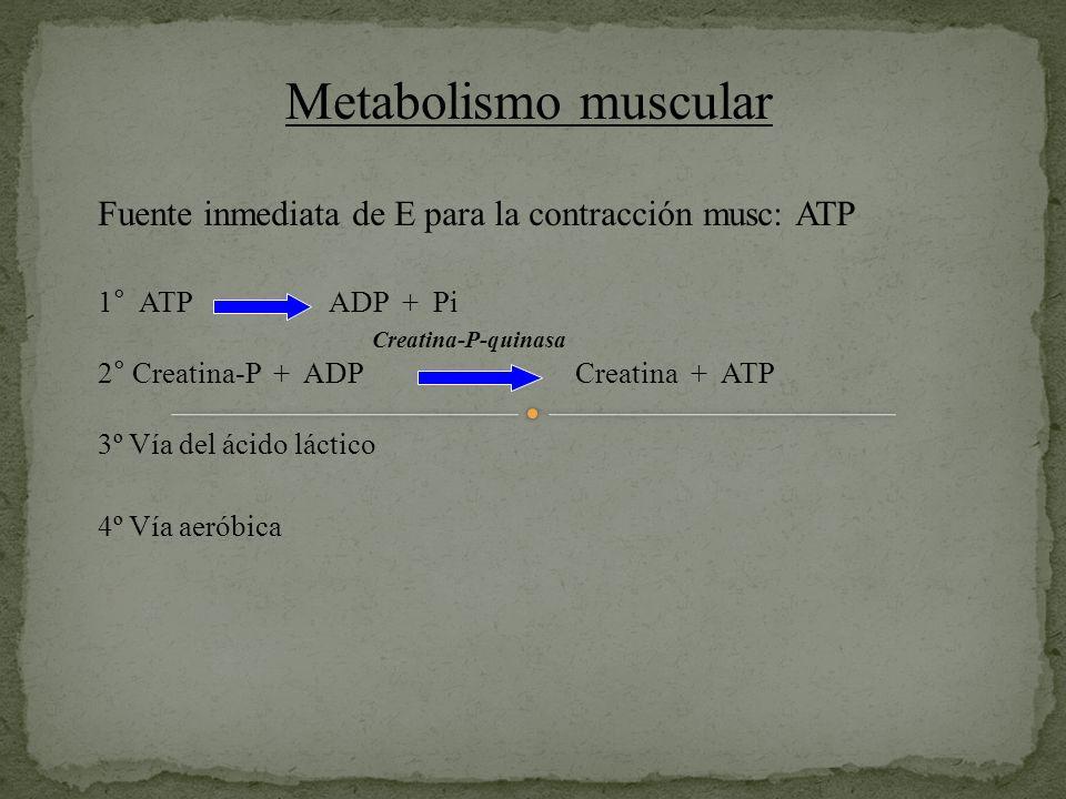 Metabolismo muscular Fuente inmediata de E para la contracción musc: ATP. 1° ATP ADP + Pi.