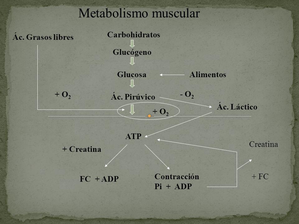 Metabolismo muscular Carbohidratos Ác. Grasos libres Glucógeno Glucosa