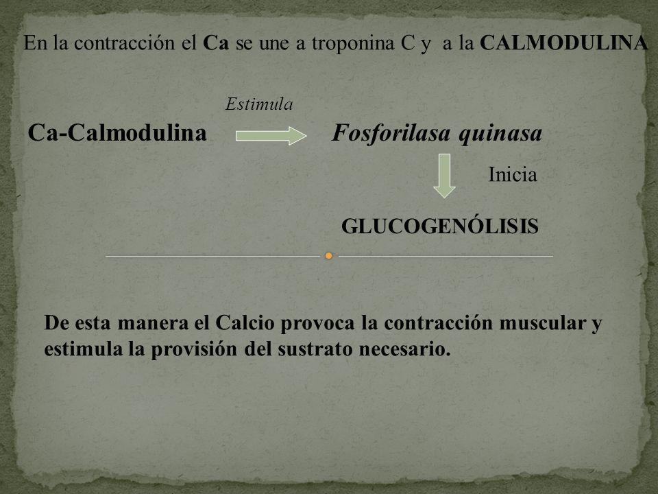Ca-Calmodulina Fosforilasa quinasa