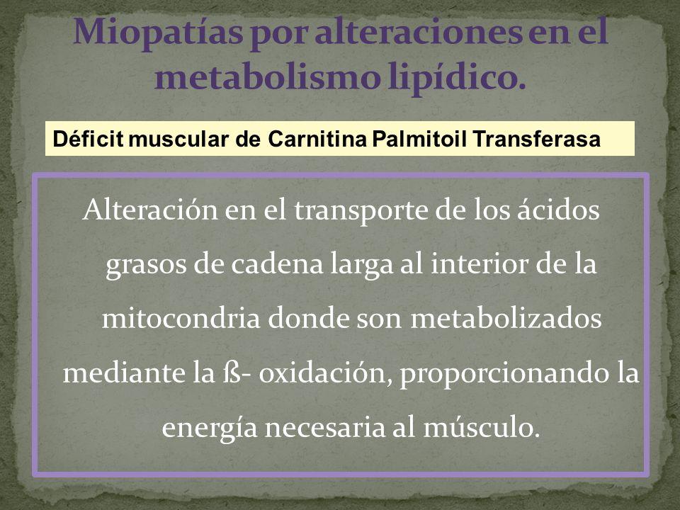 Miopatías por alteraciones en el metabolismo lipídico.