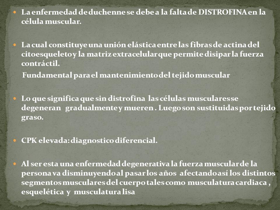 La enfermedad de duchenne se debe a la falta de DISTROFINA en la célula muscular.