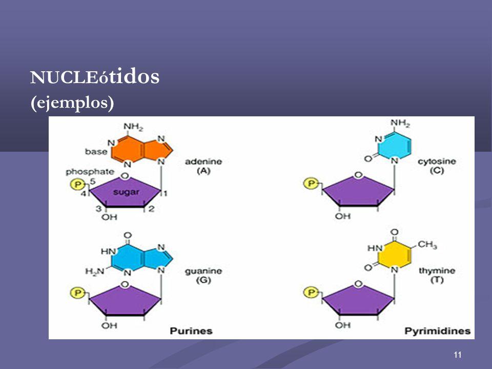 NUCLEótidos (ejemplos)