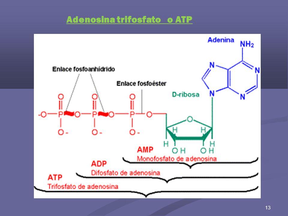 Adenosina trifosfato o ATP