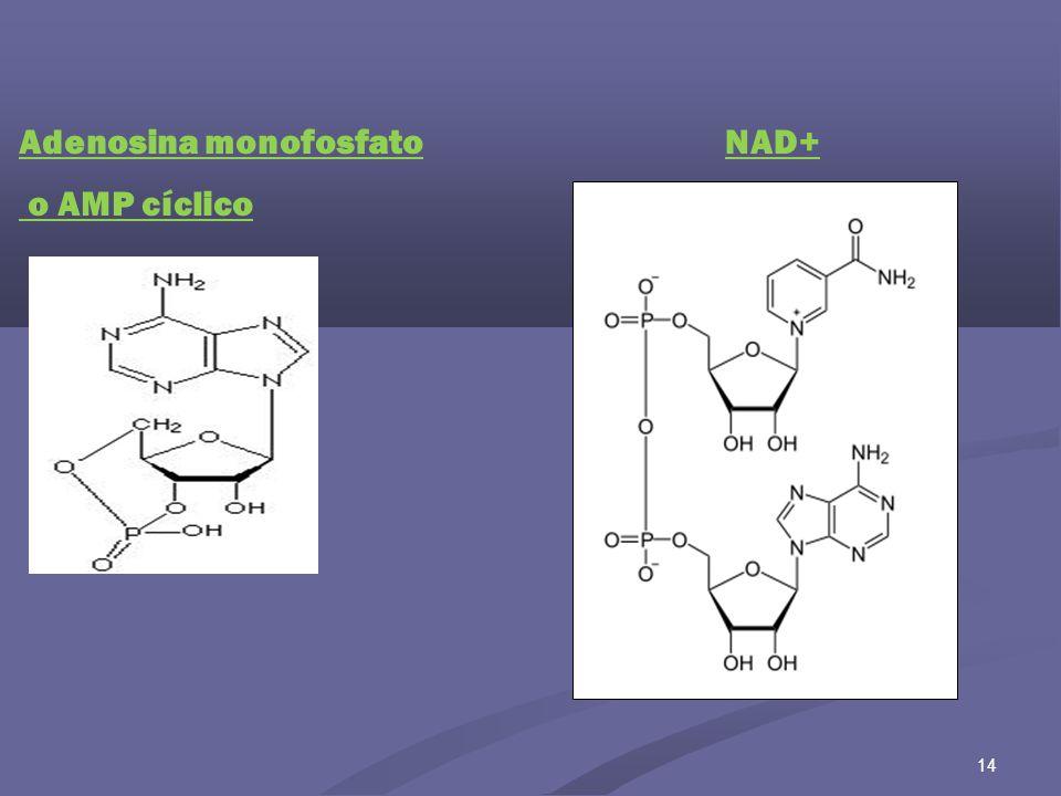 Adenosina monofosfato o AMP cíclico NAD+
