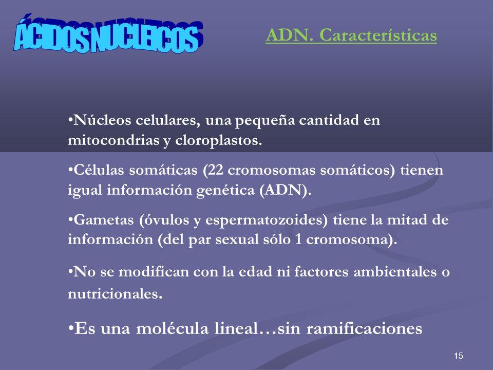 ÁCIDOS NUCLEICOS ADN. Características