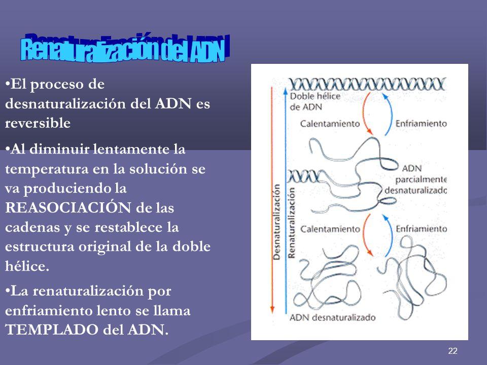Renaturalización del ADN
