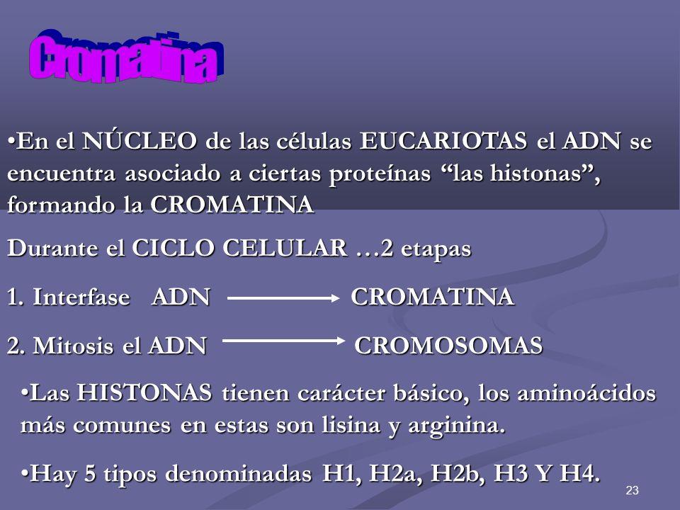 Cromatina En el NÚCLEO de las células EUCARIOTAS el ADN se encuentra asociado a ciertas proteínas las histonas , formando la CROMATINA.