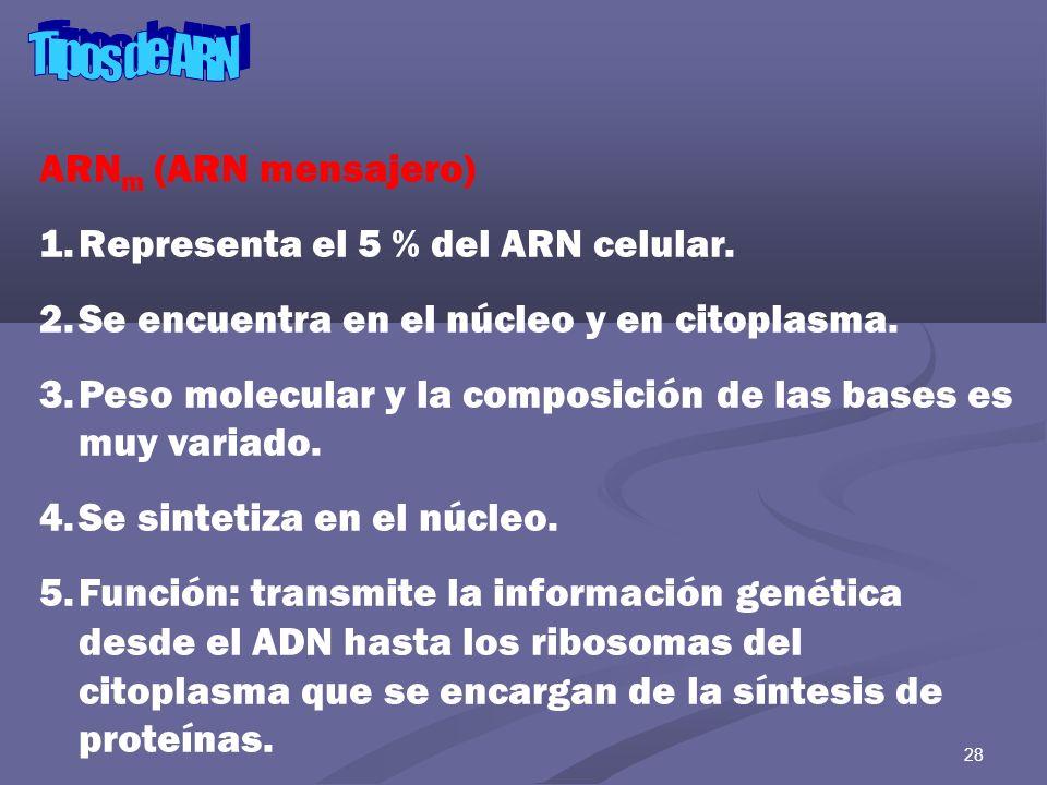 Tipos de ARN ARNm (ARN mensajero) Representa el 5 % del ARN celular.