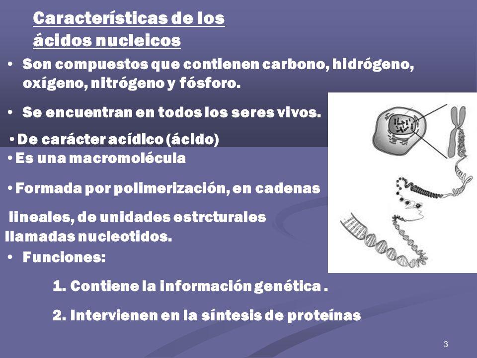 Características de los ácidos nucleicos