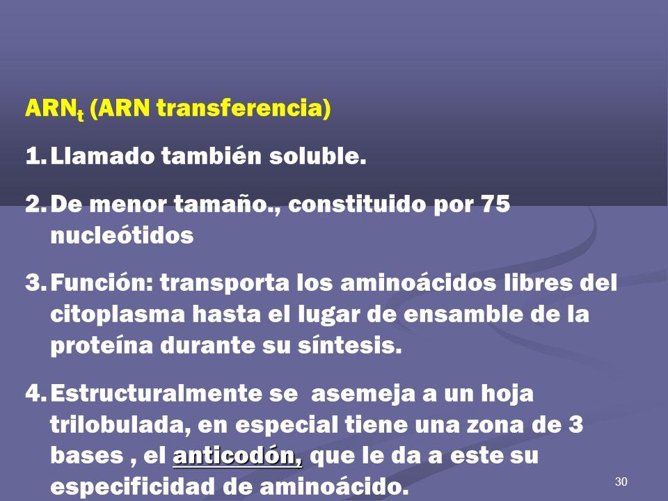 ARNt (ARN transferencia) Llamado también soluble.