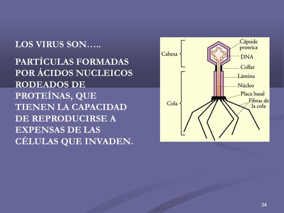 LOS VIRUS SON…..