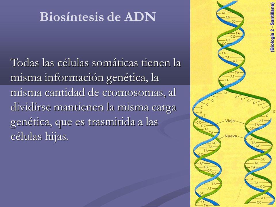 Biosíntesis de ADN