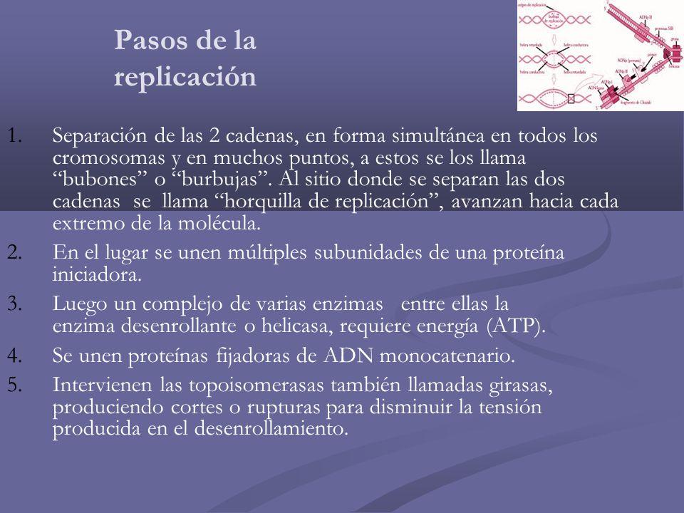 Pasos de la replicación