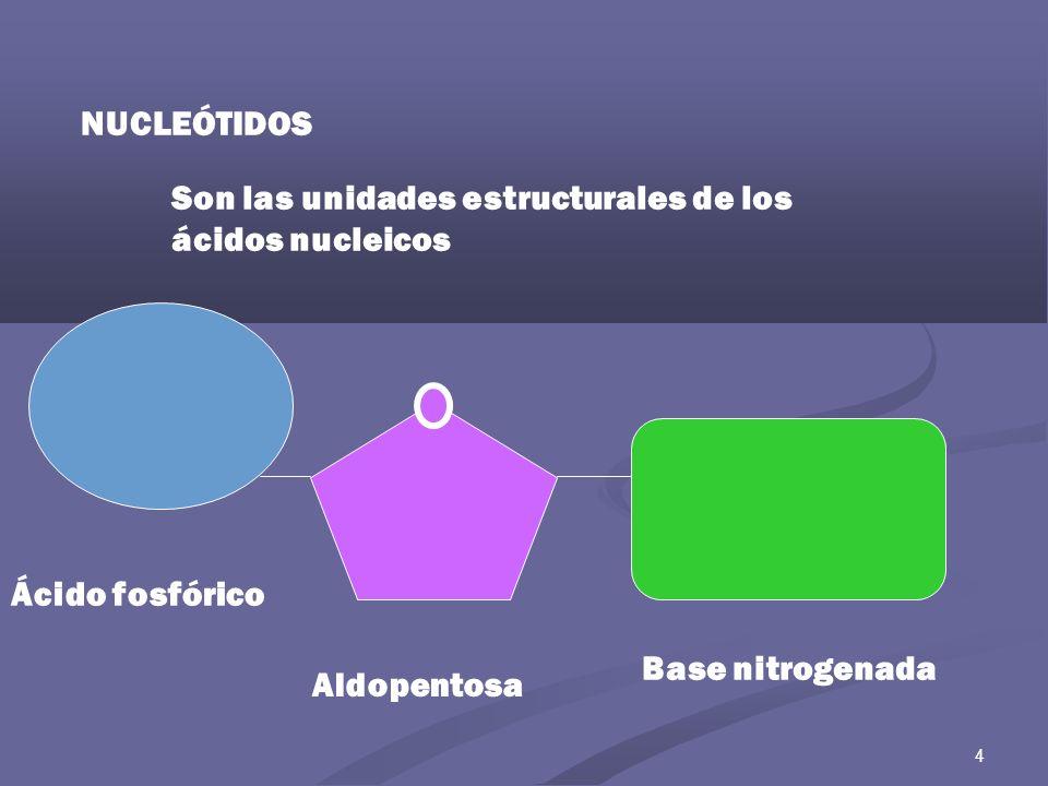 Son las unidades estructurales de los ácidos nucleicos