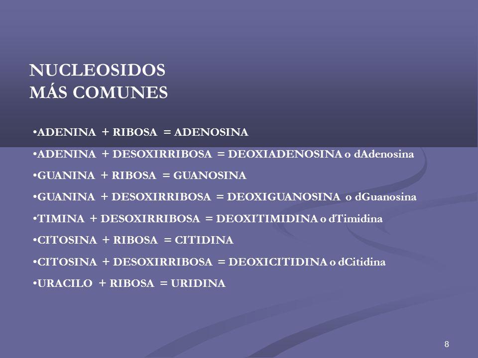 NUCLEOSIDOS MÁS COMUNES