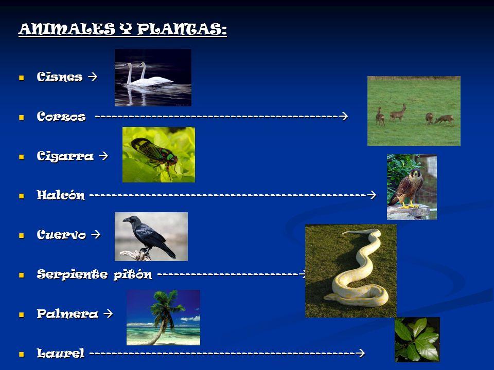 ANIMALES Y PLANTAS: Cisnes 