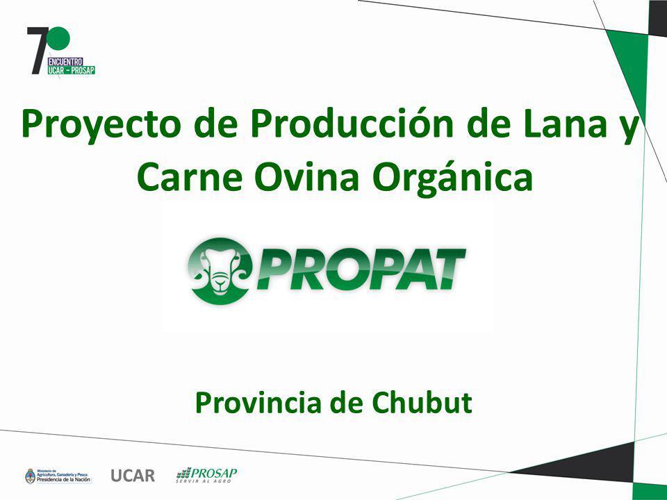 Proyecto de Producción de Lana y