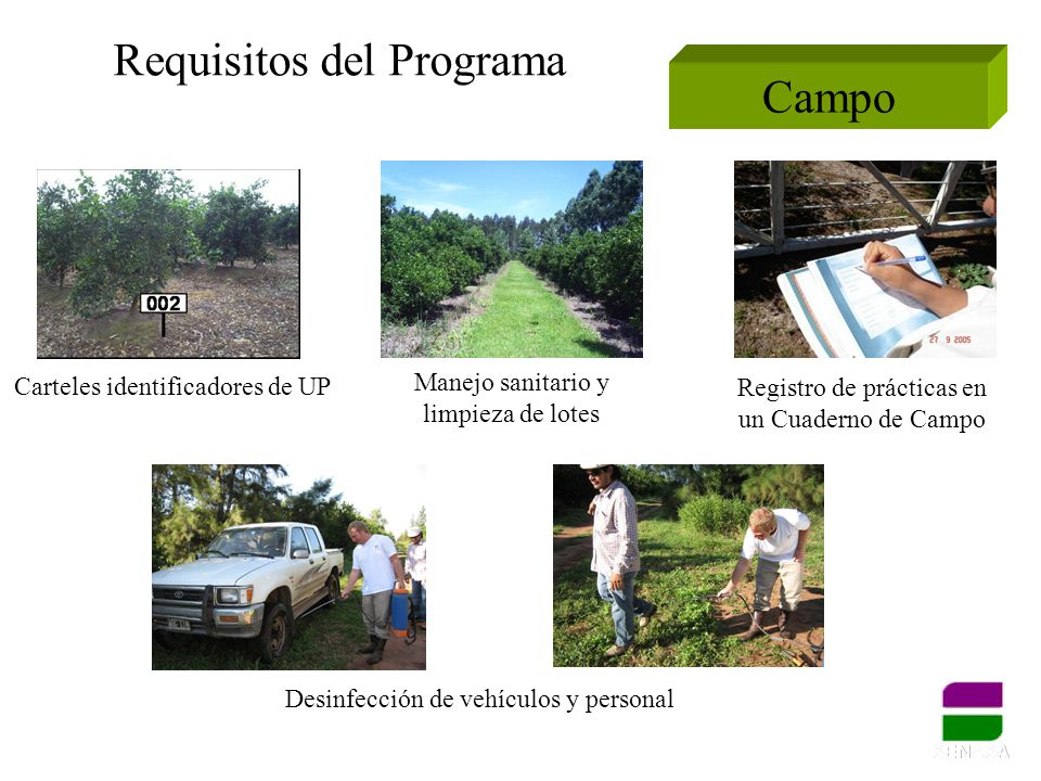 Requisitos del Programa Campo