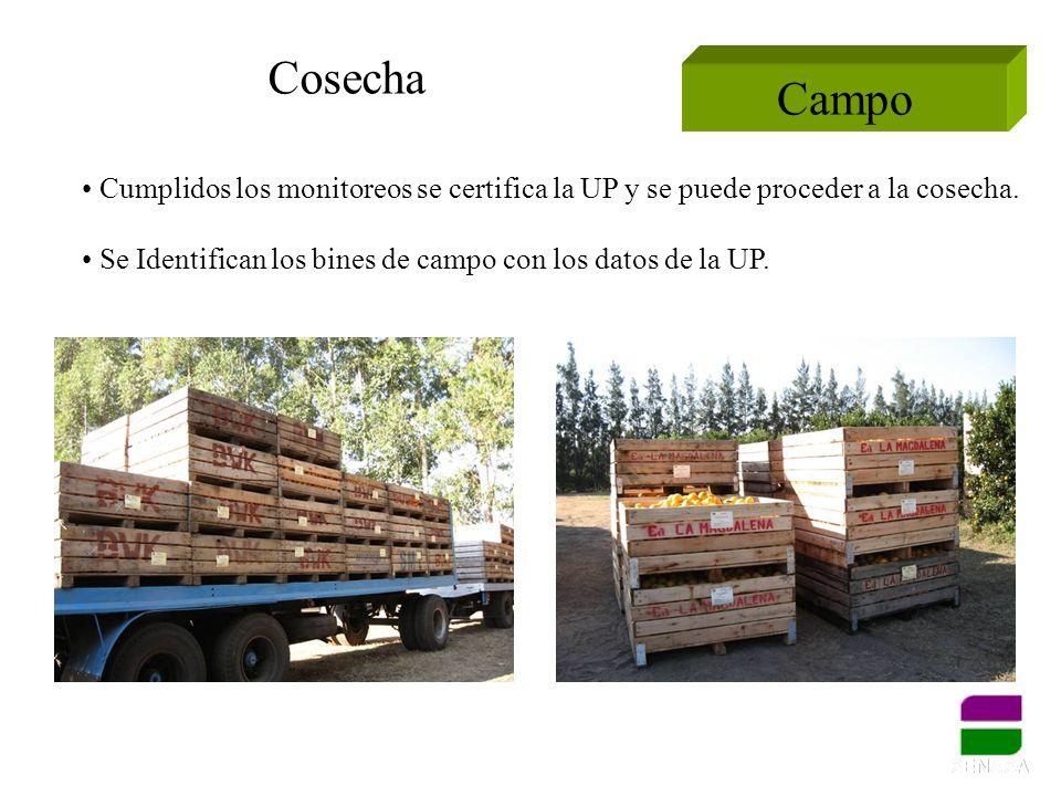 Cosecha Campo. Cumplidos los monitoreos se certifica la UP y se puede proceder a la cosecha.