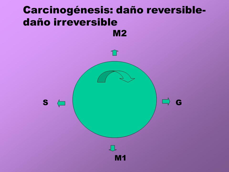Carcinogénesis: daño reversible- daño irreversible
