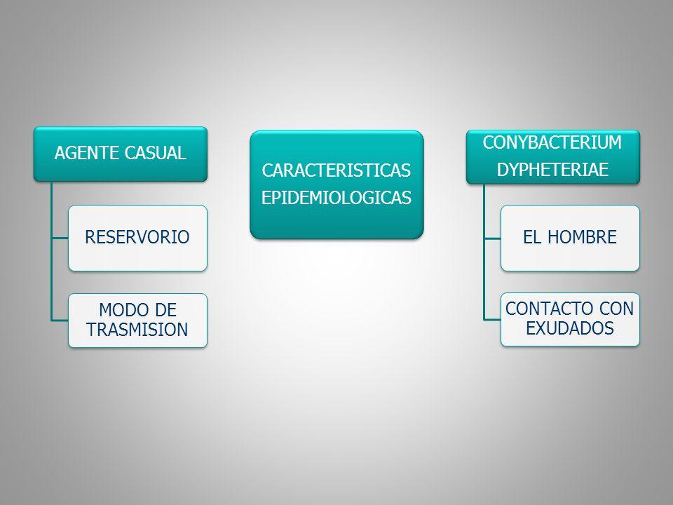 AGENTE CASUAL RESERVORIO. MODO DE TRASMISION. EPIDEMIOLOGICAS. CARACTERISTICAS. CONYBACTERIUM. DYPHETERIAE.