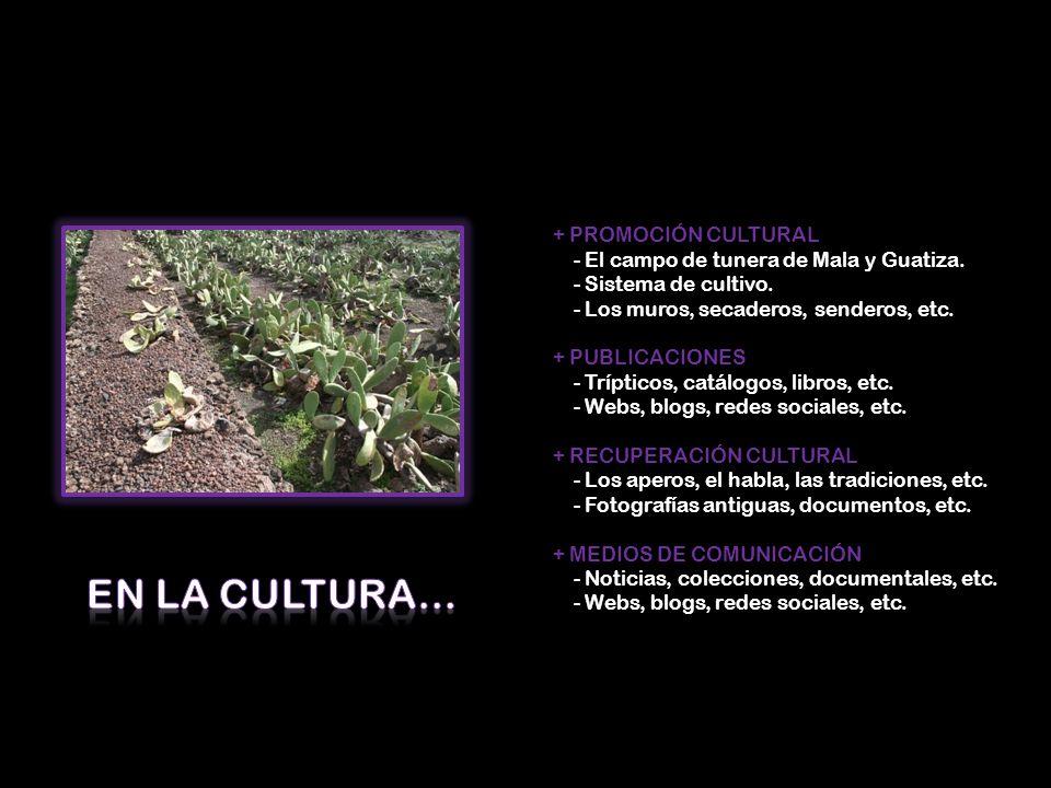 En la Cultura… + PROMOCIÓN CULTURAL