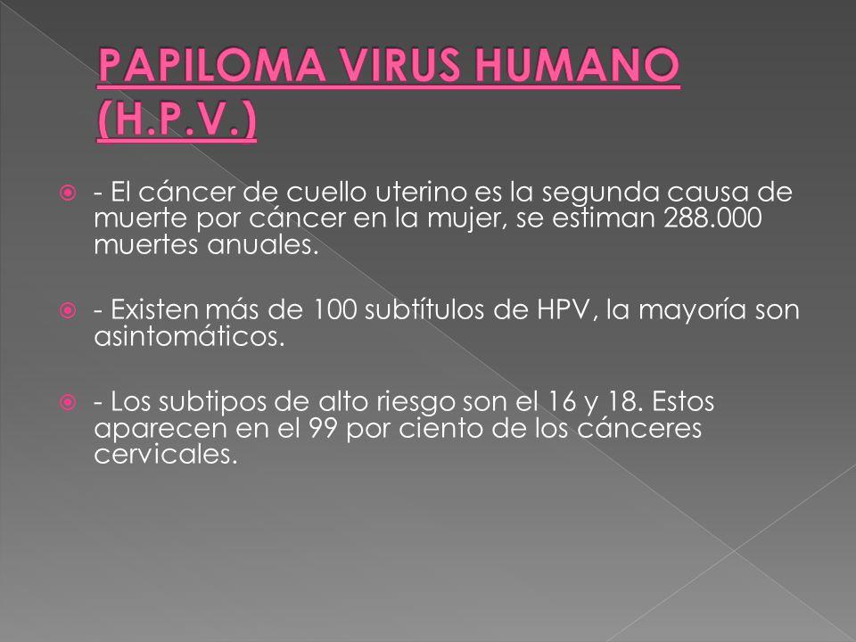 PAPILOMA VIRUS HUMANO (H.P.V.)