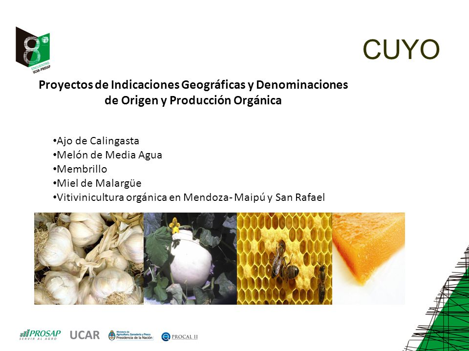 CUYO Proyectos de Indicaciones Geográficas y Denominaciones de Origen y Producción Orgánica. Ajo de Calingasta.