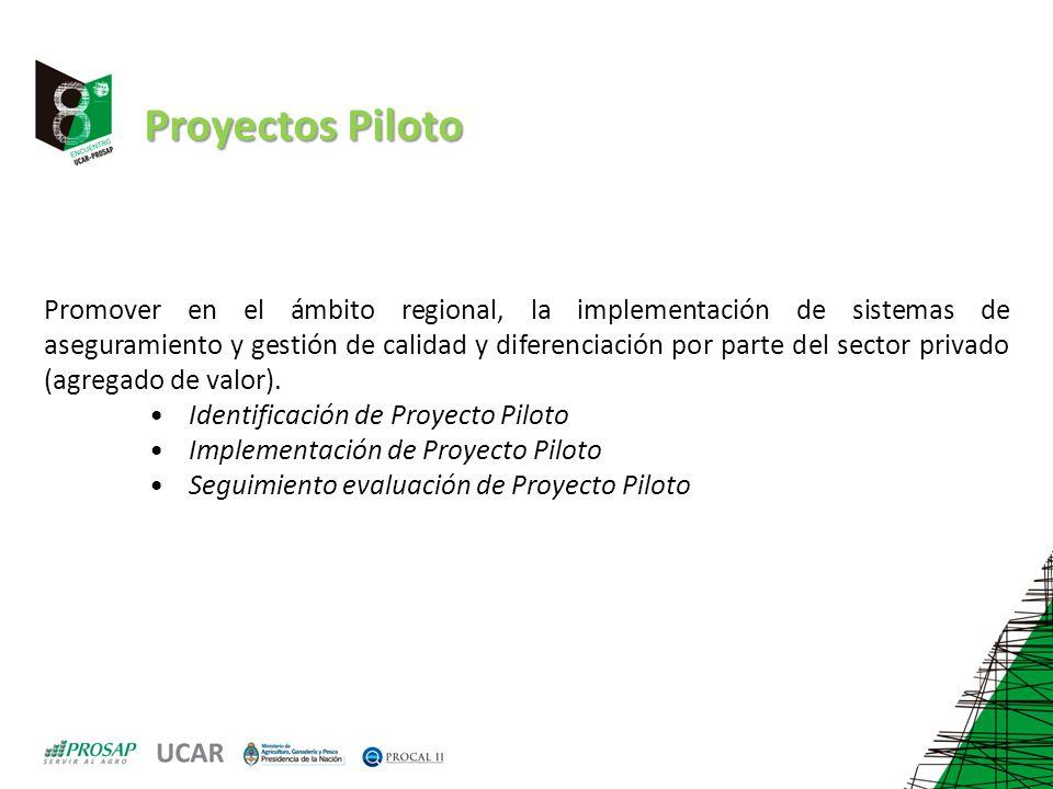 Proyectos Piloto