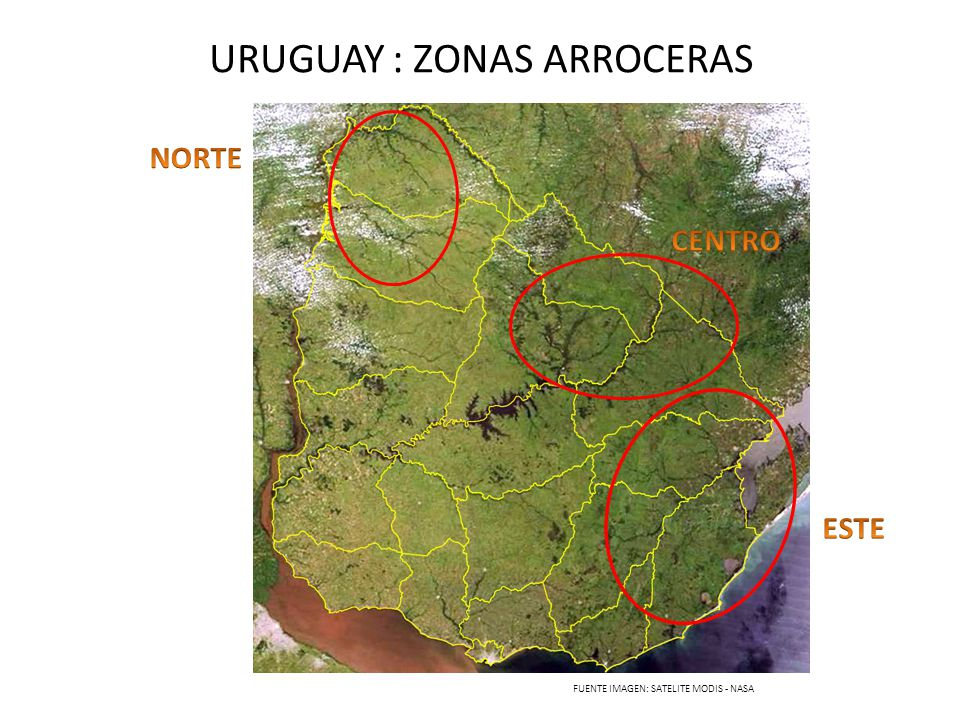 URUGUAY : ZONAS ARROCERAS