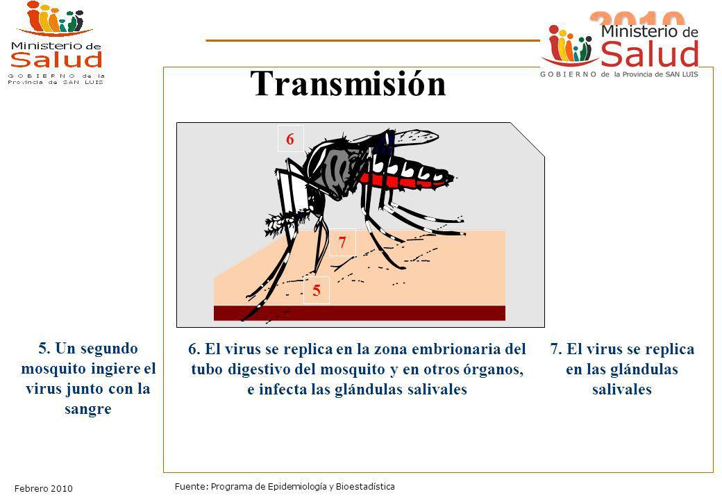 Transmisión 6. 7. 5. 5. Un segundo mosquito ingiere el virus junto con la sangre.