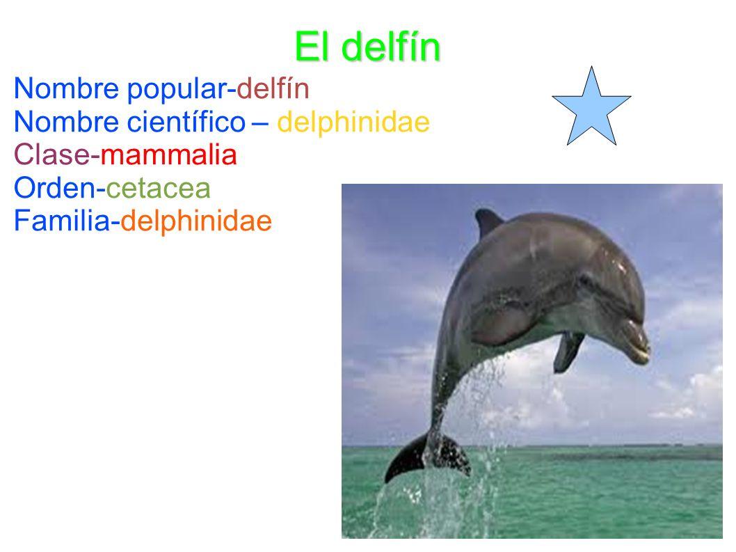 El delfín Nombre popular-delfín