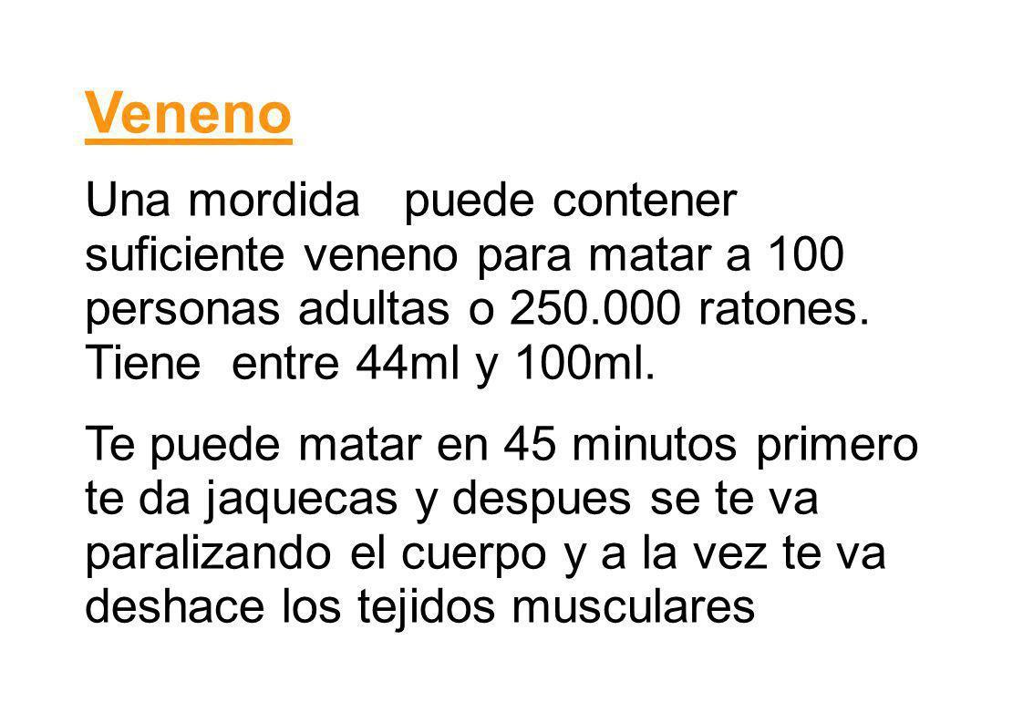 VenenoUna mordida puede contener suficiente veneno para matar a 100 personas adultas o 250.000 ratones. Tiene entre 44ml y 100ml.
