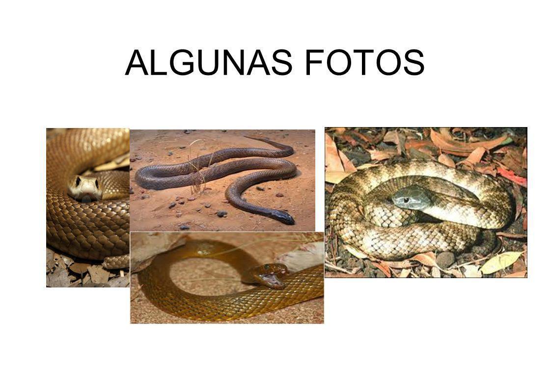 ALGUNAS FOTOS