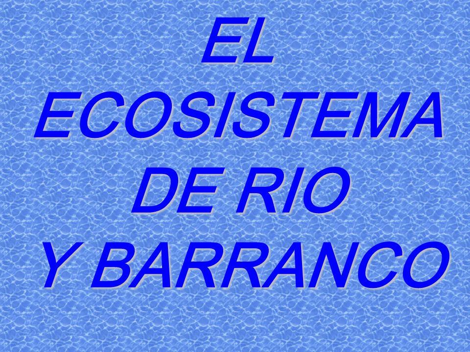 EL ECOSISTEMA DE RIO Y BARRANCO