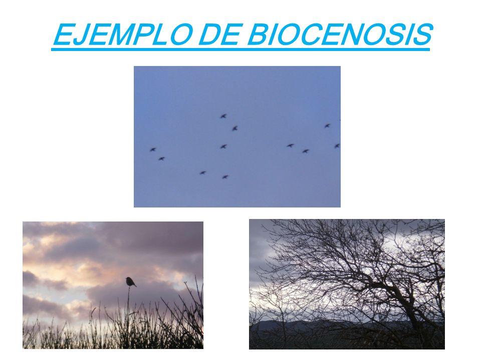 4 EJEMPLO DE BIOCENOSIS