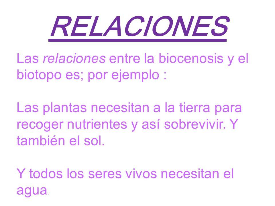 5RELACIONES. Las relaciones entre la biocenosis y el biotopo es; por ejemplo :