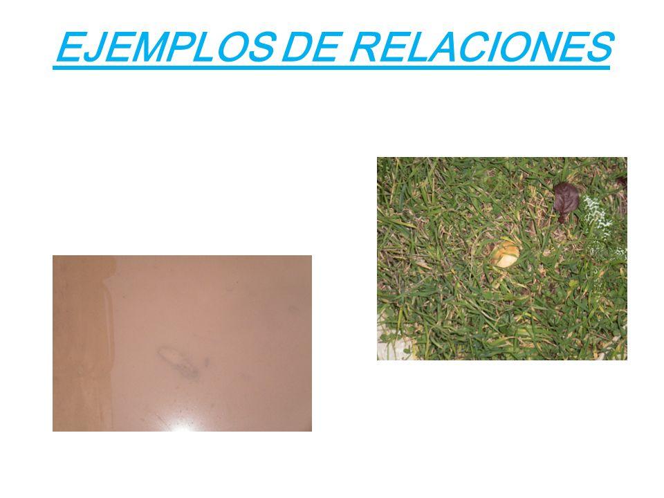 EJEMPLOS DE RELACIONES