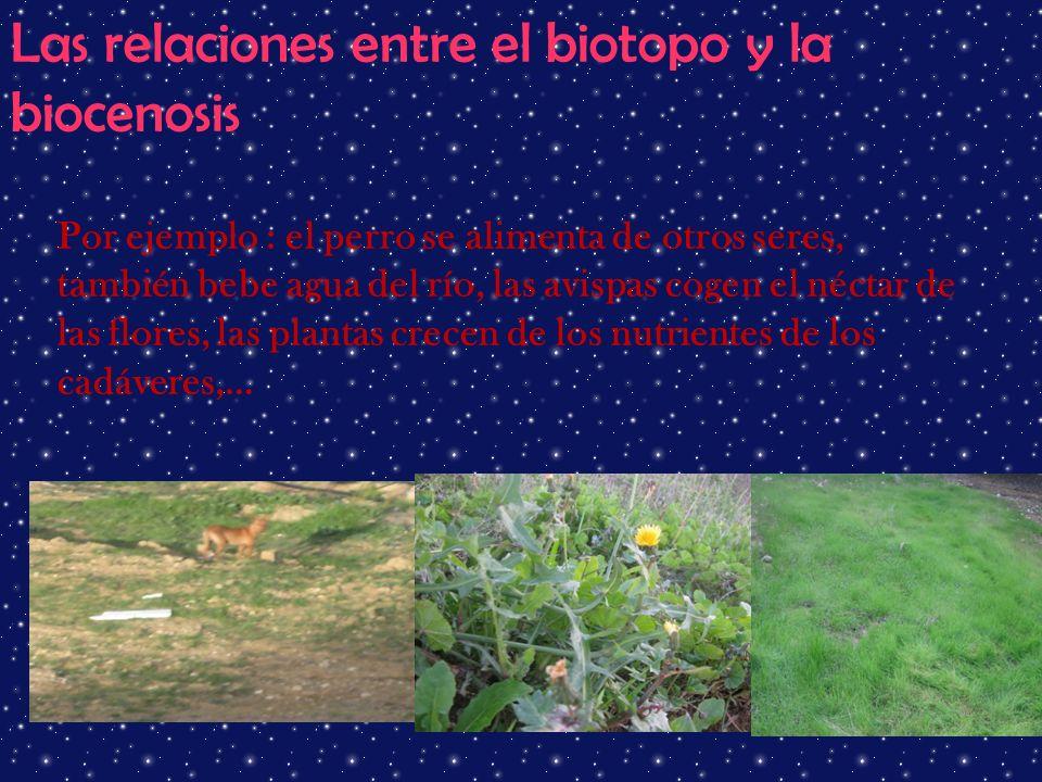 Las relaciones entre el biotopo y la biocenosis