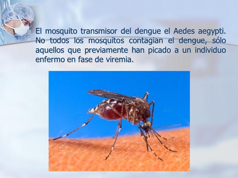 El mosquito transmisor del dengue el Aedes aegypti