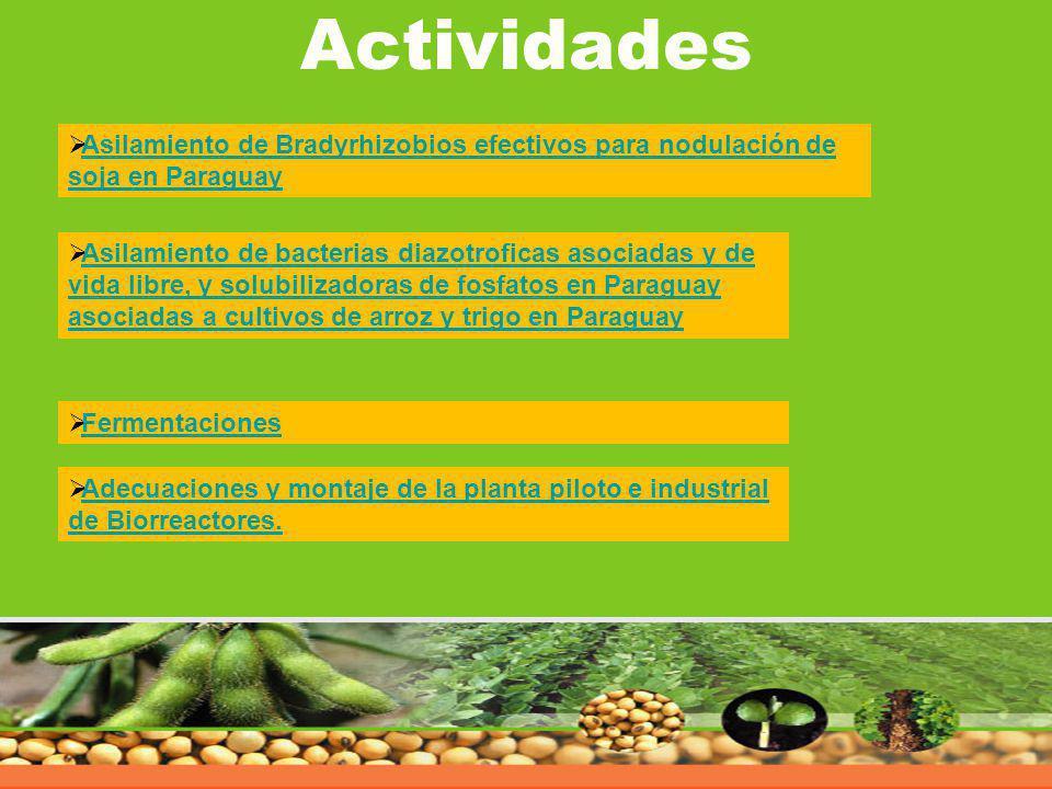 Actividades Asilamiento de Bradyrhizobios efectivos para nodulación de soja en Paraguay.
