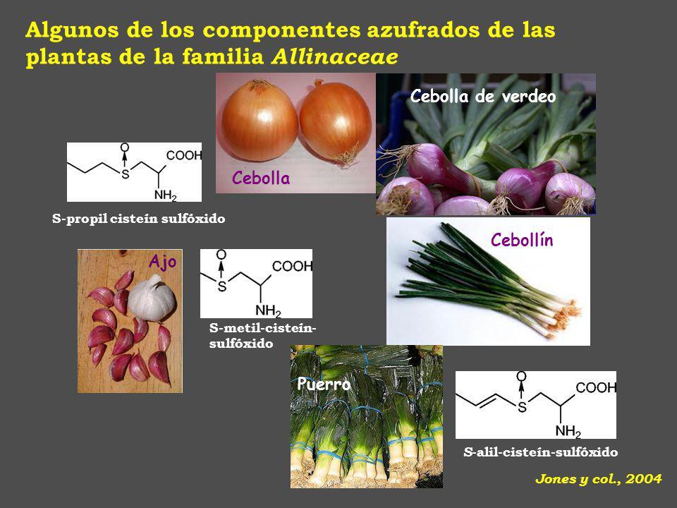 Algunos de los componentes azufrados de las plantas de la familia Allinaceae