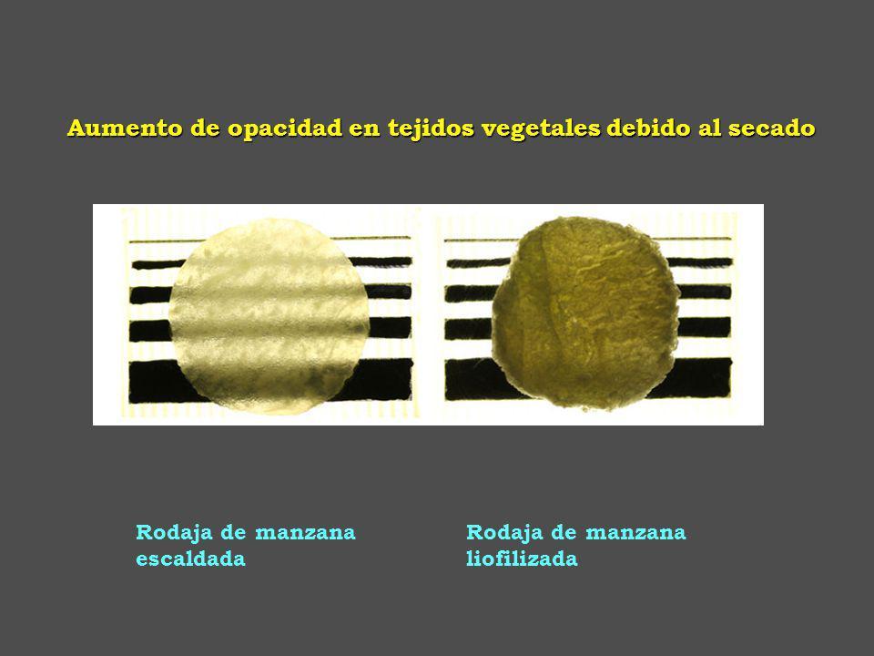 Aumento de opacidad en tejidos vegetales debido al secado
